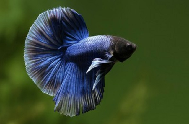 buy Aquarium Fishes Ahmedabad Gujarat India