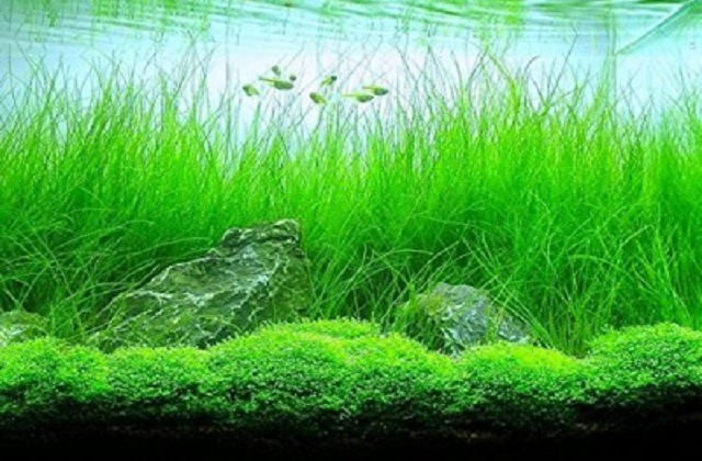 buy Aquarium Plants Ahmedabad Gujarat India