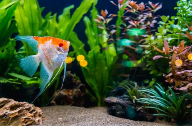 buy Aquarium Accessories Ahmedabad Gujarat India