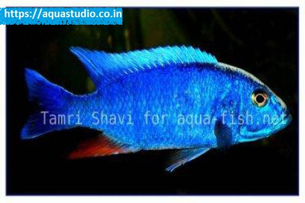 buy Azure hap Ahmedabad Gujarat India